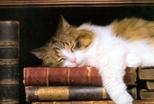 Books & Book Places / My favorite places for books are anywhere I find them. Libraries, Book Stores, estate sales Stacks, Piles, Cases & Shelves. or anyplace else. / by Mark Stone