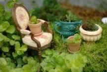 Garden - Fairy Gardens / Small scale gardening for fun. / by Grace Hensley @ eTilth