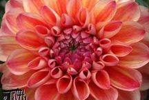 Beautiful Flowers / Images I've posted on my website at http://www.etilth.com.  Enjoy! / by Grace Hensley @ eTilth
