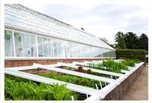 Build - Cold Frames / Cold frames and hot beds / by Grace Hensley @ eTilth