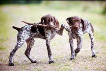 Puppy Plotting