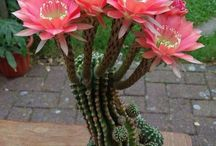 Cacti & Succulents / Those plants that are very hardy.  / by Mark Stone
