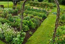 Gardening / Great Ideas for My Garden