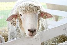 Sheep / No Wolves Aloud!