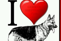 ♥ German Shepherds ♥ / by Janice Conway