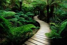 Awe Inspiring, Natures Beauty