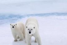 Global Warming :((