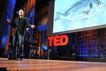 TED Talks We Love