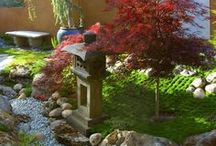Back landscaping