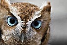 Oul' owls. / by Tua My Lilja