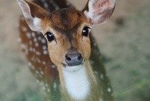 Deer Obsessed  / by Jennifer McCaleb
