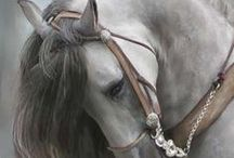 Beautiful Horses / by Laurie Kimpell