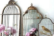 BirdyBirdy