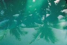 | Palmtrees |