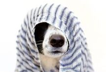 Animals & Pets / Can't resist cute furbabies :)
