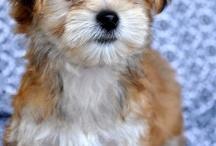 Pets :)