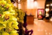 Gardens, Parks, Flowers & Plants - Beautiful Hotel Decoration & Gardens / Beautiful flowers and gardens, parks, plants and decorations