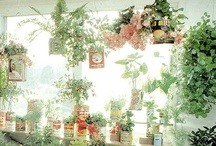 Gardening / by Melissa Seaburg