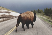beautiful beasts... / Wild critters you may just bump into on your next hike or hammocking sesh...