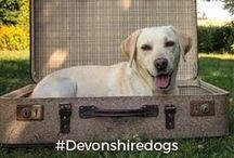 #Devonshiredogs Instagram Competition / We've put together a little #instacompetition throughout April! Follow us on Instagram @devarmsboltonabbey, @devonshirearmsbeeley or @devonshire_arms_pilsley and until the 30th April 2016 post your best shots of your pooches! Use #DevonshireDogs and tag your photos @devarmsboltonabbey @devonshirearmsbeeley or @devonshire_arms_pilsley to win a fabulous Afternoon Tea for two at The Devonshire Arms Hotel & Spa. Good luck! http://thedevonshirearms.co.uk/about-us/instagram-competition/
