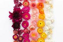 Color Happiness / color, color inspiration, art, colorful art, design, bright color, color photography, color pattern, pastel, artwork, rainbow,