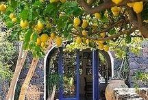 Travel | Amalfi Coast / Amalfi Coast Travel Guides + Resources