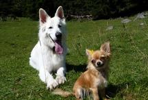Dog's Orte & Freunde