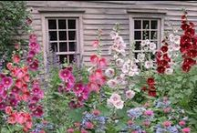 Garden gate / Bloom where your planted ~ Mary Englebright / by Tammie