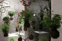 String Gardens / by Carmen Mastin