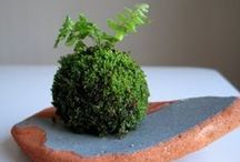 Succulents and mossy things cont... / by Tammie