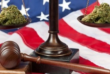 Marijuana News / Cannabis news from around the web || supported by: www.weedist.com / by Weedist