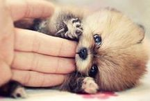 Melt My Heart ♥ / The cutest of the cute animals.