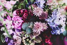 Floral Fantasy / Flowers