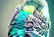 Beautiful Creatures / The animal kingdom in all it's glory!