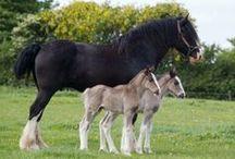 Horses / by Jeff & Bri
