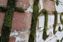 Moss Art / by Taylor Davenport