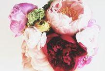 F L O R A / //inspiring florals and arrangements// / by Lyndsey Grundman