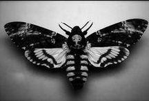 butterflies_photos