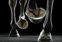 Horses <3<3<3