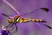 Bugs / by Diane Hull