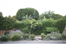 Gardens & plants / Gardens, trees, plants, and outdoor landscaping / by The President Wears Prada