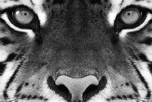 lions, and tigers, and bears! / by Jess Kaminsky