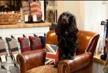 """Take your dog to work day / Some shots from """"Take your dog to work day"""". / by A Hume Country Clothing"""