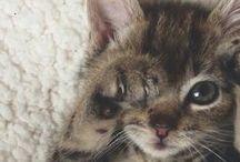 fur babies.