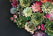 succulents and cacti.