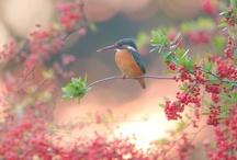 birds / by Sharon Lambert