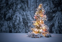 Christmas time!!! / by Julie Ward