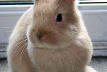 Rabbits etc.