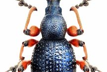 Insects / Insects are endlessly interesting