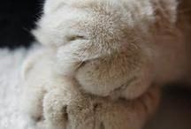 Paws / by Meg Q